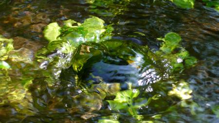 springwaterb.jpg